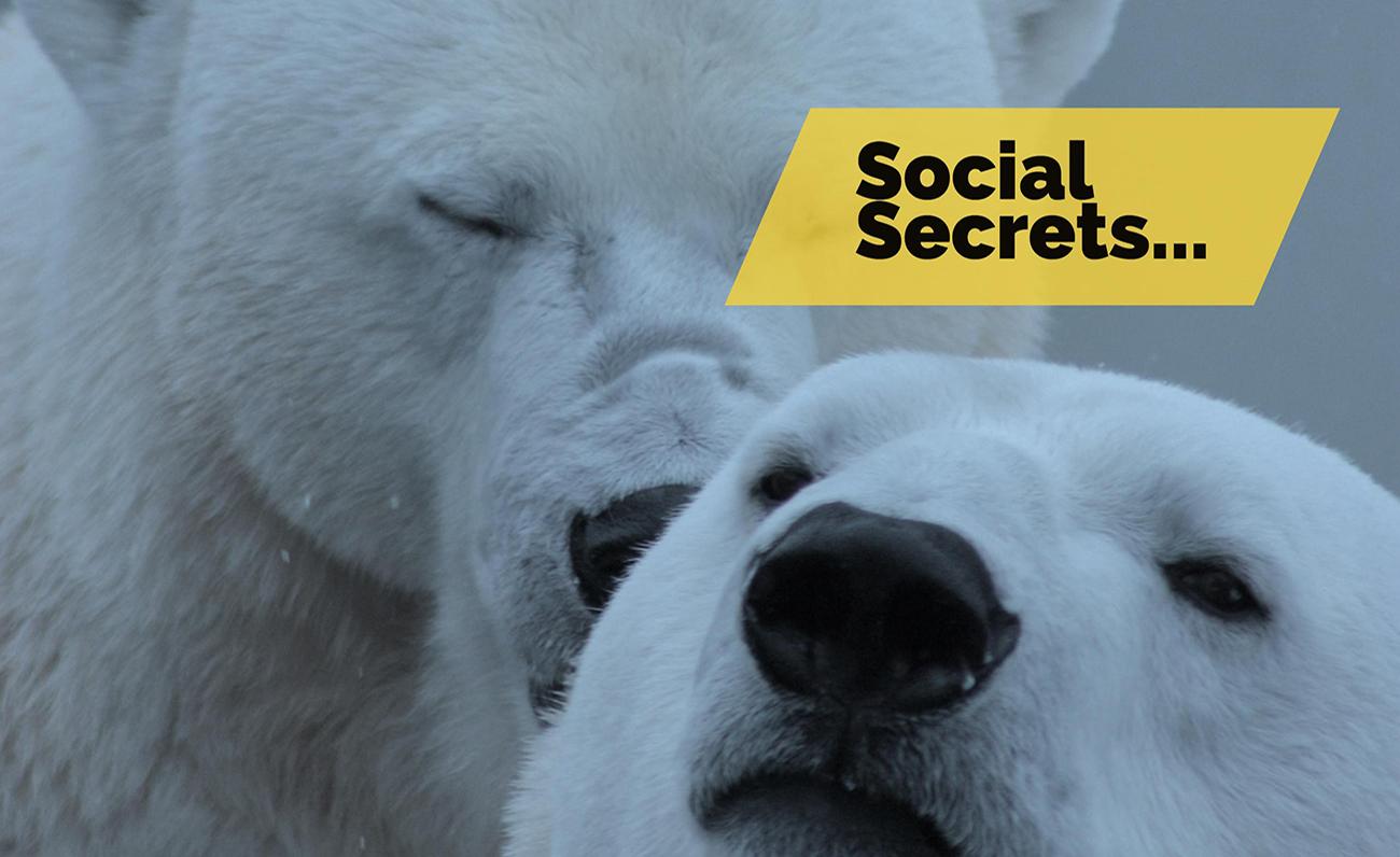 social secrets